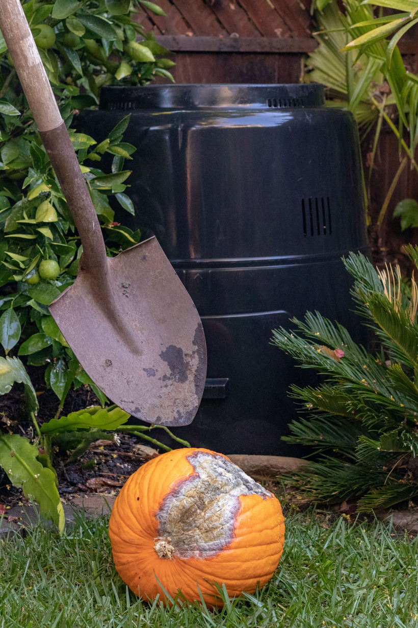 Pumpkin and Compost Bin